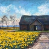 New Daffodils, Old Barn